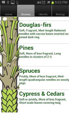 Screenshots for Doug Fir Christmas Tree Guide