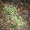 Leaf-Cutter Ant Cuttings