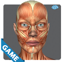 Muscular Anatomy Game icon