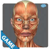 Muscular Anatomy Game