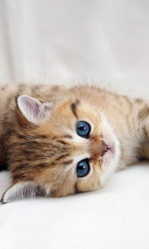 玩個人化App 有趣的小貓壁紙免費 APP試玩