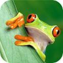 Frog sound animal sounds icon