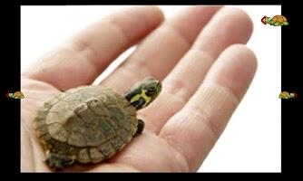 Screenshot of turtles bowling for children