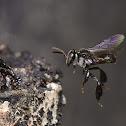 Mosquito bee
