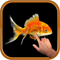 Magic Wave : Gold Fish icon