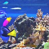 Aquarium Bible Wallpaper Free