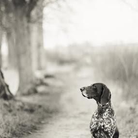 my best friend... by Hanna Králíková - Animals - Dogs Portraits