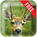 Deer Live Wallpaper icon