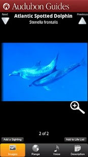 Audubon Mammals - screenshot thumbnail