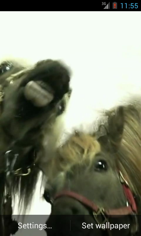 Horses lick screen Video LWP - screenshot