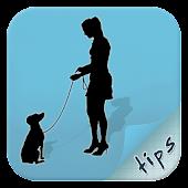 Tips For Dog Potty Training