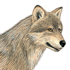Mammals of North America icon