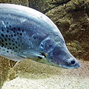 by Omrin Kamarudin - Animals Fish