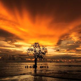 Alone by Teddy Winanda - Landscapes Sunsets & Sunrises ( nirwana beach, west sumatera tourism, nature, indonesia tourism,  )