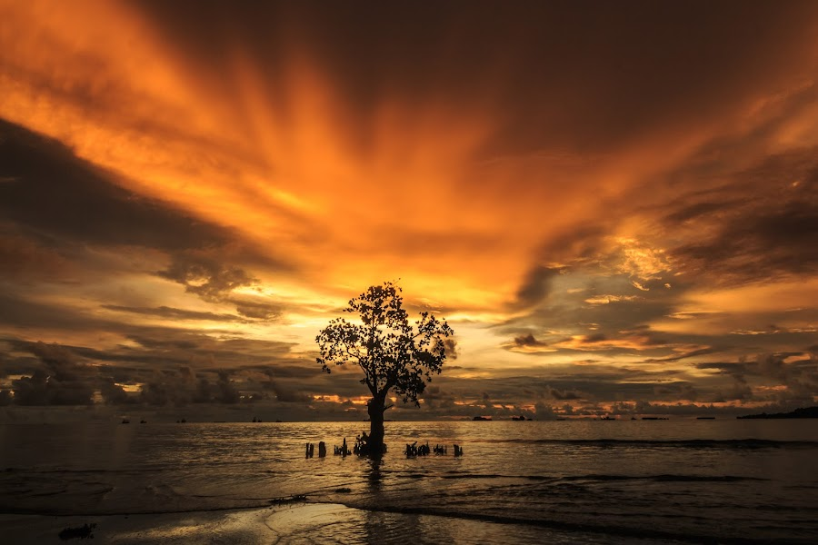 Alone by Teddy Winanda - Landscapes Sunsets & Sunrises ( nirwana beach, west sumatera tourism, nature, indonesia tourism,  )
