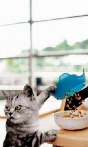 Cat Food Live Wallpaper