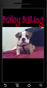 Bailey Bulldog Pictures - náhled