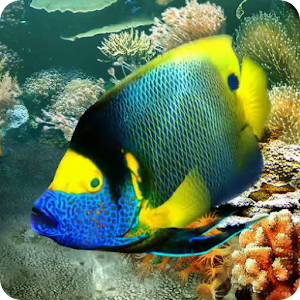 Download tropical fish live wallpaper apk on pc download for Fish live game