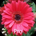 Mother's Flowers Pro, Nexus 7 icon