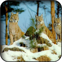 Lynx Wallpapers icon