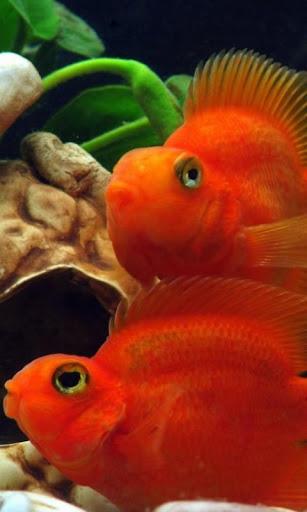 Fish Wallpaper HD Free