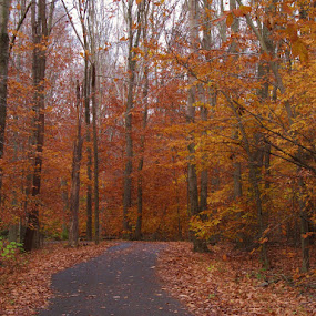 by Donna Schmidt - Nature Up Close Trees & Bushes ( fall leaves on ground, fall leaves )