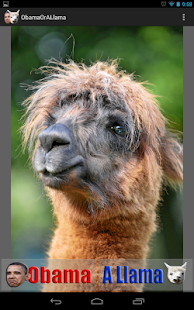 Obama or a Llama - screenshot thumbnail