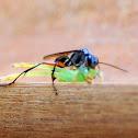 Wasp vs Green spider