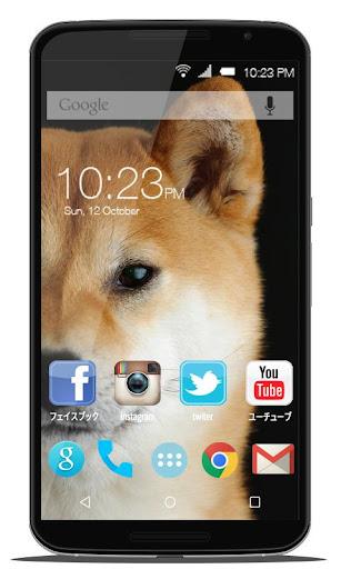 かわいい芝犬の画像