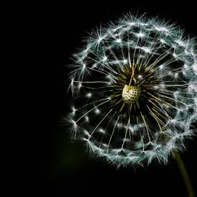 by Jani Matko - Flowers Single Flower