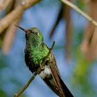 Cuban Emerald