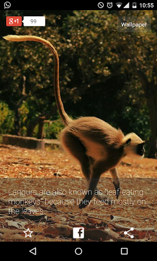 Animal Facts Digest : Magazine