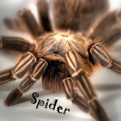 Ninja Spider Wallpaper LWP