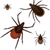 Lyme Disease Safety Lite
