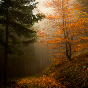 Foggy morning in the forest by Peter Samuelsson - Nature Up Close Trees & Bushes ( fall leaves on ground, fall leaves )