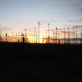 Arctic sunrise thru old burn by Roady Tripper - Landscapes Sunsets & Sunrises