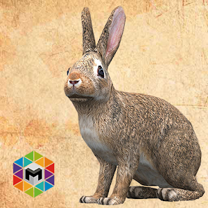 Rabbit Simulator for PC and MAC