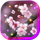 Sakura Gallery live wallpaper