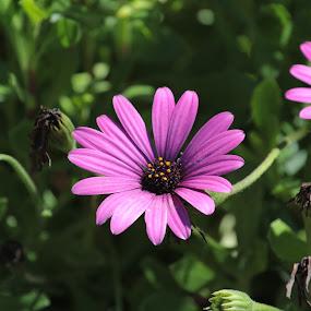 by Ruben Guerrero - Flowers Flowers in the Wild