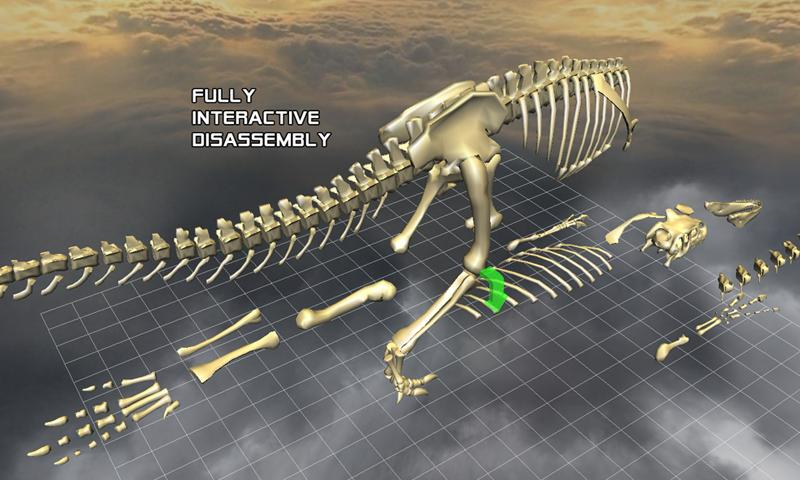 Body Disassembly 3D - screenshot