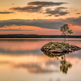 Return to the Lonely Tree by Colin Harley - Landscapes Waterscapes ( water, birch, tree, d5200, lake, nikon, island )