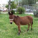 Donkey (Γάιδαρος)