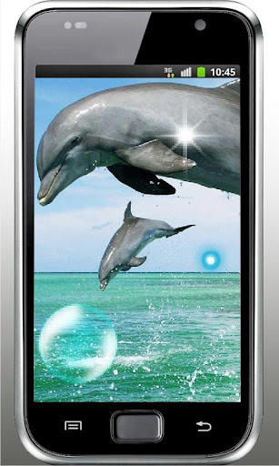 Dolphins Songs live wallpaper