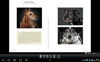 Screenshot of The Bark: dog culture magazine