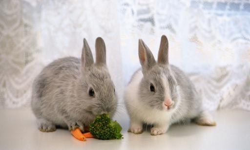 귀여운 토끼 배경 화면