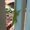 Common Green Lizard