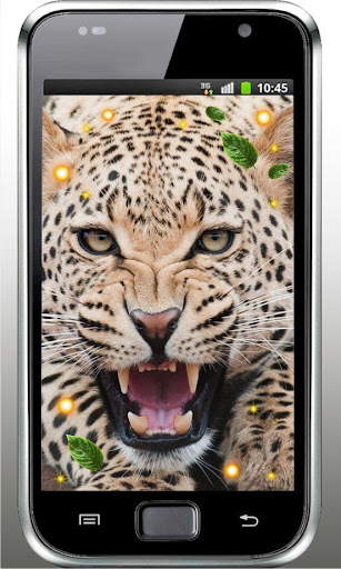 Leopard Wild HD live wallpaper