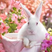토끼는 배경 화면 라이브