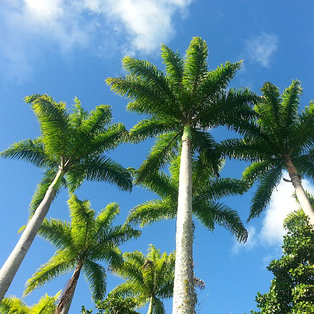 Qué belleza by Anna Fernandez - Nature Up Close Trees & Bushes ( venezuela, palmas, cielo, sky, palms,  )