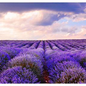 by Vanja Keser - Landscapes Prairies, Meadows & Fields ( lavender fields )